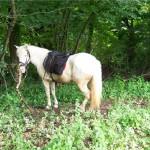 Point d'arrêt des cavaliers et de repos chevaux